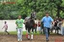 Fotos Carazinho - Sprint Sales LEILAO e GP